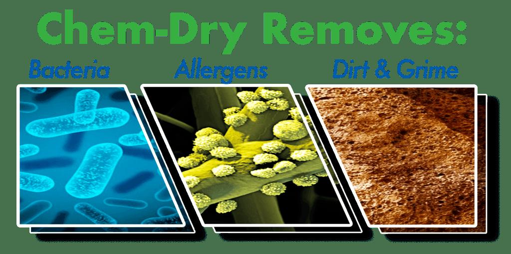 Allergy Control | Dust Mite Chem-Dry Nova