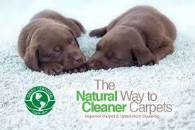 Pets Chem-Dry Nova